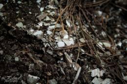 Akmens laikmeta atliekas